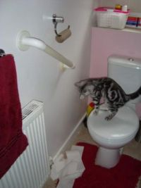 NAUGHTY OLIVER - WASTING TOILET ROLLS
