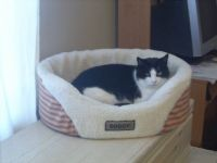 Felix-our doggy cat
