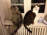 deux chats qui posent