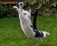 epic-cat-jump