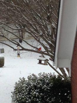 Snowy Alabama