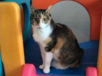 Calie Cat :)