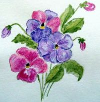 Pansies in Watercolour Pencil