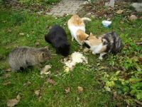 meeting garden cats...