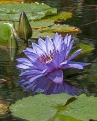 Water Beauty in Blue