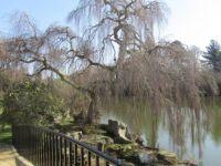 Sheffild Garden