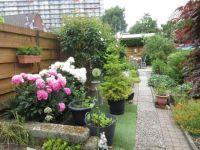 Garden view (11 June 2021)