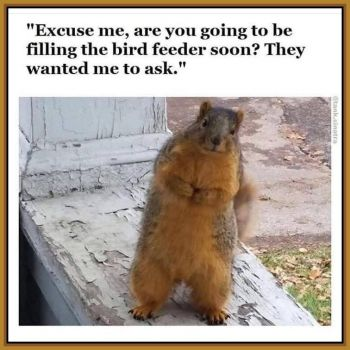 Cheeky Cyril the Squirrel: Excuse me...