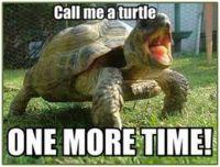 I'm a Tortoise, Ya Hear?
