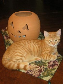 Pumpkin Kittie