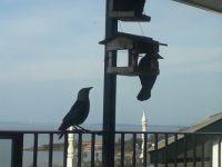 Birds queuing.