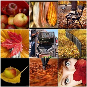 Autumn Mosaic Monday by GardenCalm on flickr