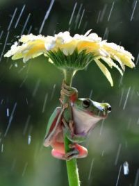 Clingin' in the rain