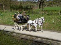 A Carriage Ride in the Country