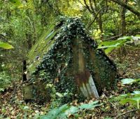 Henhouse in the woods