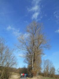 Stromy - the trees