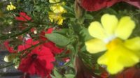 some of my annuals