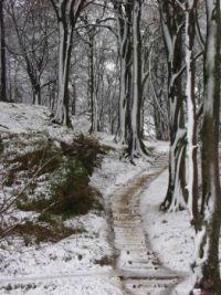 Skeoch woods in winter