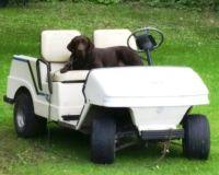 Golf Cart Guard