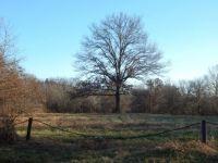 Nicely shaped Oak Tree.