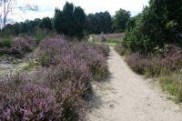 The heath near Haaksbergen