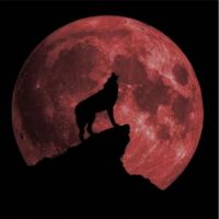 Wolf blood moon ecllpse