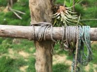 Where the air plant meets the rope