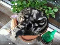 Samantha Napping in Potted Plant.  It was never quite the same after that!