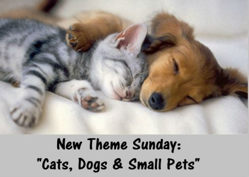 "New Theme Sunday: ""Cats, Dogs & Small Pets""  ENJOY"