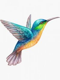 2  ~  'Kiene Kolibrie'