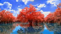 Redtree bluesky