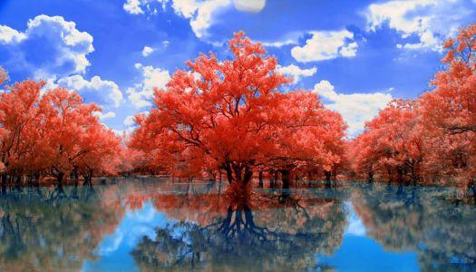 Redtree bluesky