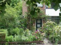 Garden in Brielle, full of flowers