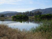 Las Gallinas Ponds