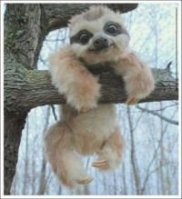 Photogenic Baby Sloth.JPG