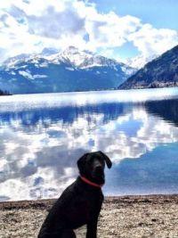 my dog and my home - kaprun - austria