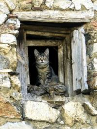 A Happy Cat - Catalan Pyrenees