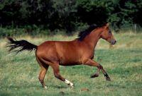 Wild_Quarter_Horse