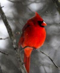 Cardinal 2: