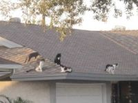 Theme:  Kitty convention