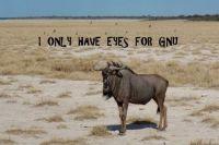 Loving Gnu