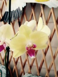 One of my lovely orchids