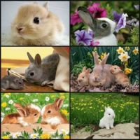 Lovely bunnies