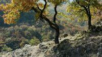 Börzsöny, nemzeti park - national park, Hungary, Börzsony