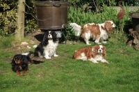 charly, jelle, timo en roebie in de tuin.