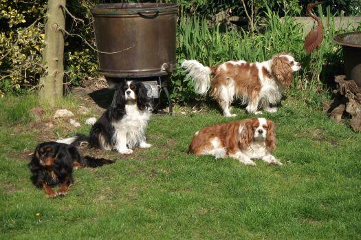charly, jelle, timo en roebie in de tuin.