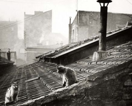 Two Cats on a Parisian Roof
