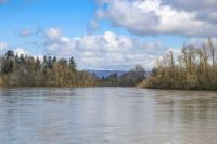 THE WILLAMETTE RIVER