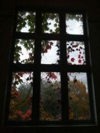 rainy day through a leafy window
