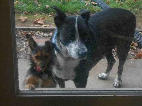 Mom, Dad~~We Want to Come In Now, Please!